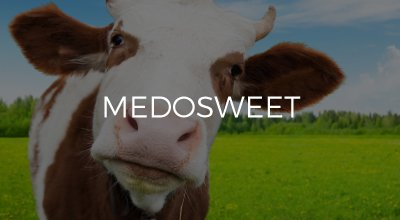 Medosweet web design by AIM